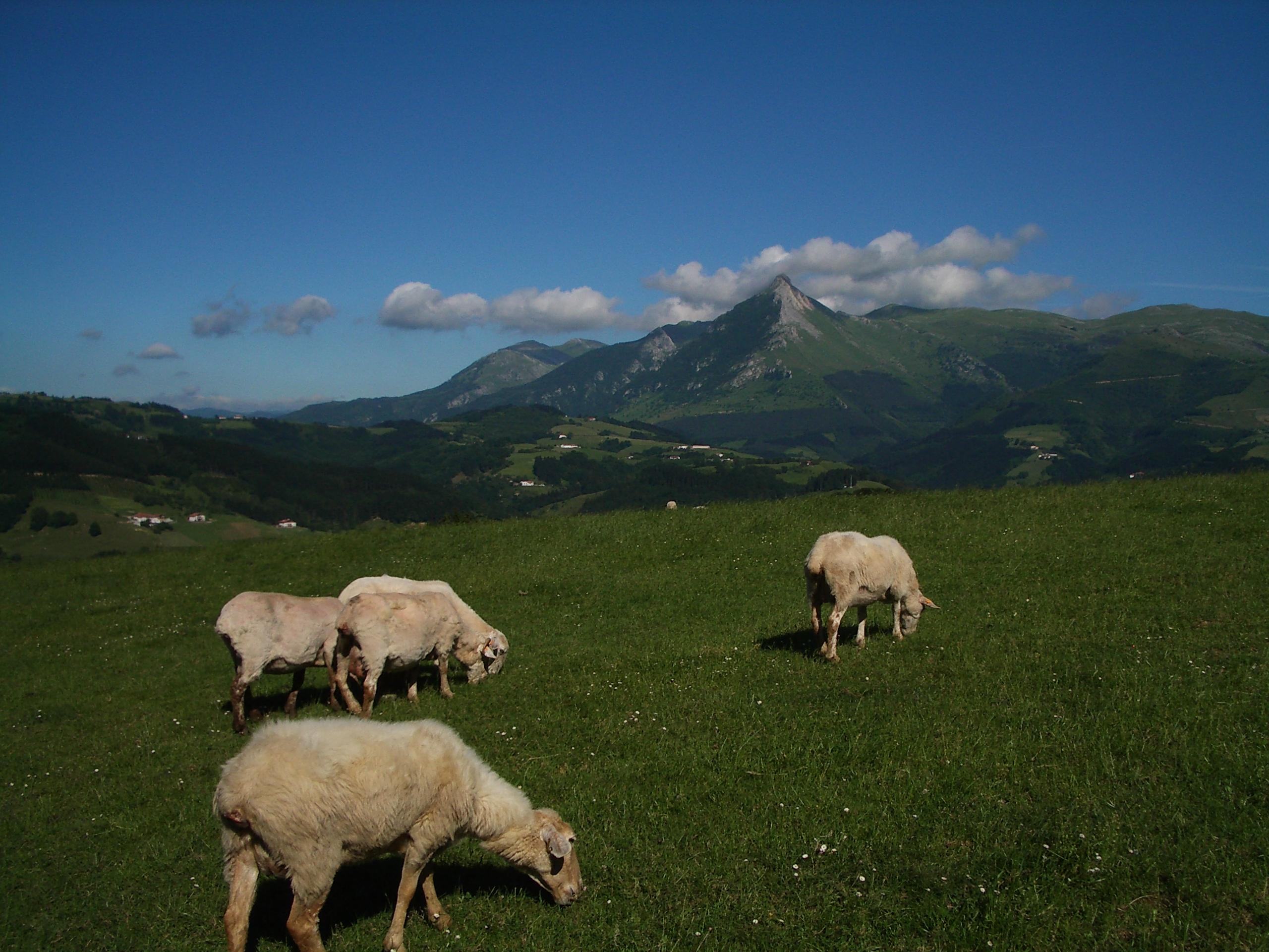 ENBA-GIPUZKOA exige RESPONSABILIDAD y RESPETO para con la cabaña ganadera y con el trabajo de los ganaderos en el monte.