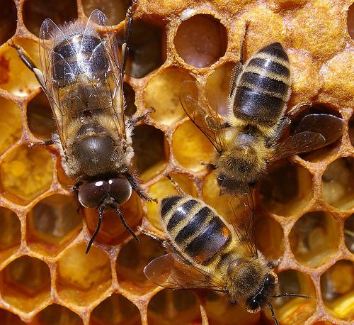 La nueva normativa de etiquetado de la miel sigue amparando el engaño al consumidor