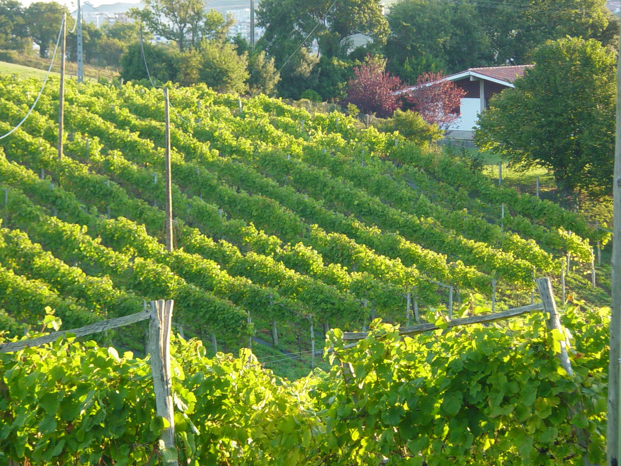 Convocatoria de ayudas a la inversión en el sector vitivinícola